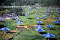 Christo: The Umbrellas, Japan - USA 1991 (4)